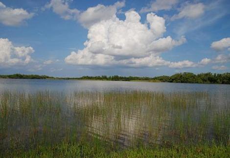 エバーグレーズ国立公園の画像 p1_18